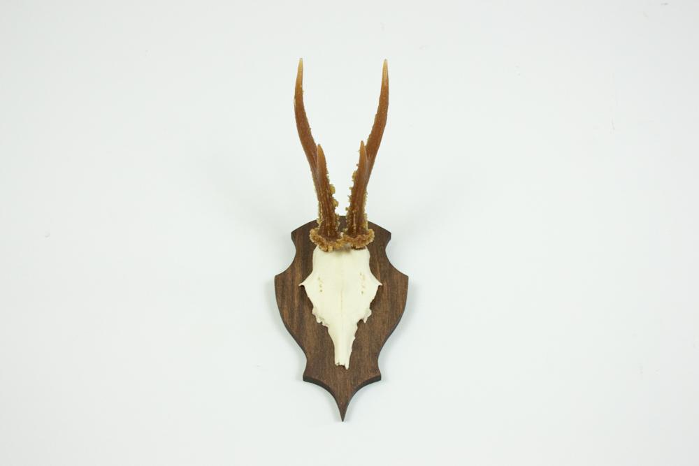 antlers-9390.jpg