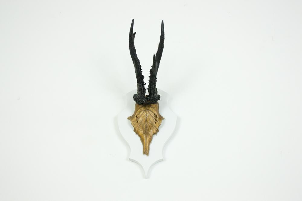 antlers-9396.jpg