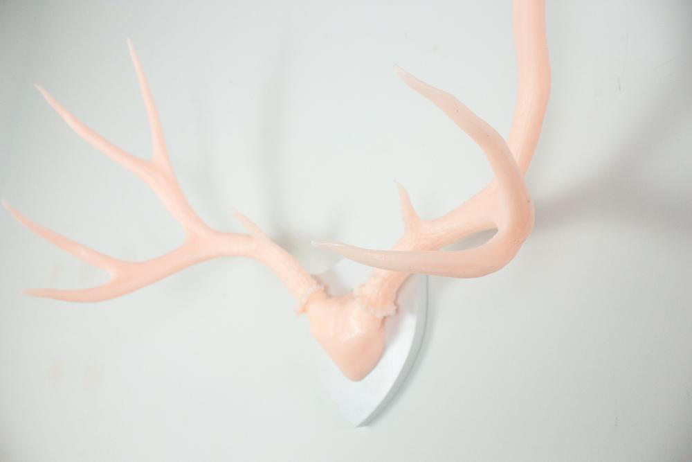 antlers-9305.jpg