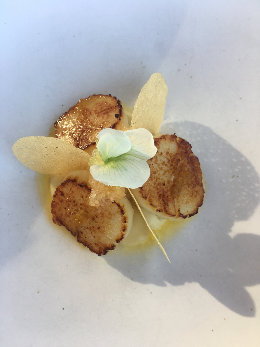 Double Island Point scallops, cauliflower, lemon purée, dory roe, finger lime