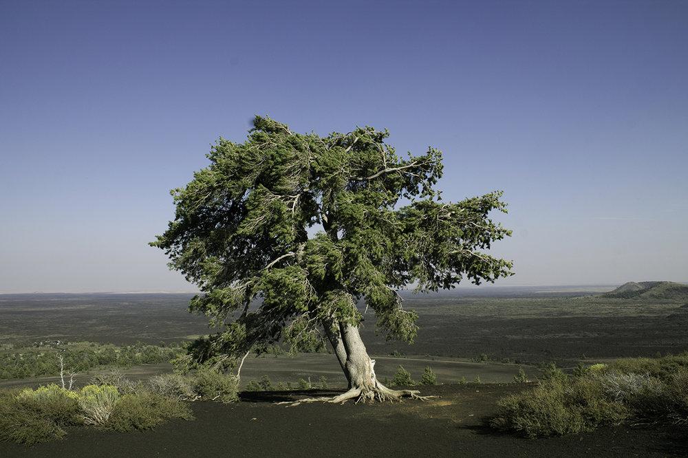 082317_010_Tree copy.jpg