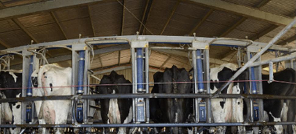 Dairy News Australia, September 10 2018