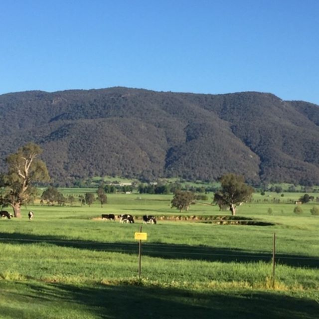 Our friend & colleague Mike Cahill sent us this great photo of Corryong Victoria which he took last weekend. Truly beautiful countryside. #countryvictoria #dairypasture #dairyland #dairyconnect
