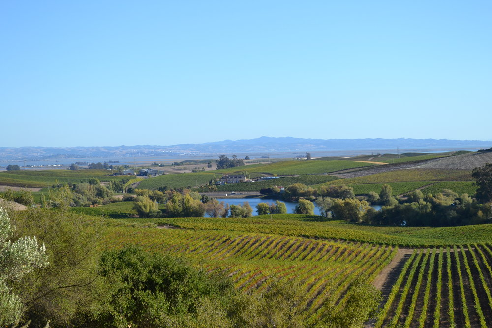 Vista de Napa Valley desde Artesa Winery