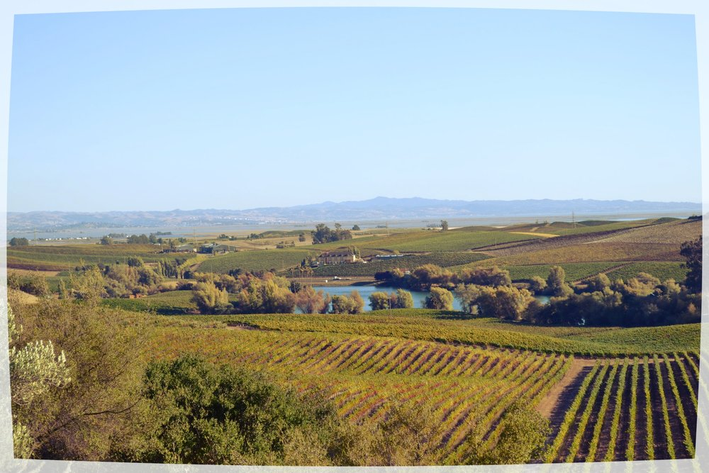 Conociendo California: NAPA VALLEY - Seguí mis tips, bajá el ritmo, almorzá afuera con una copa de vino y respirá el aire más puro de la West Coast.