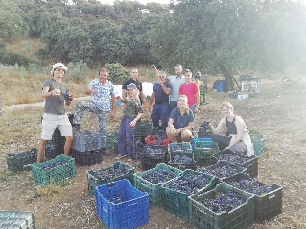 The vinyard harvest team