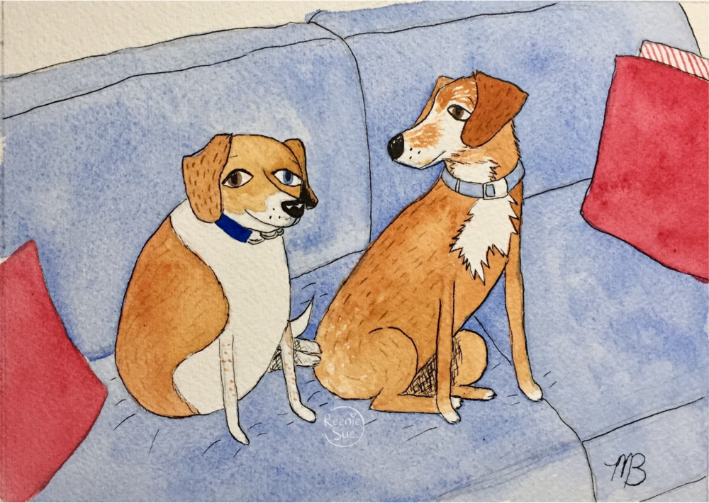Jack and Ramona, two handsome beagles sit on a blue couch.