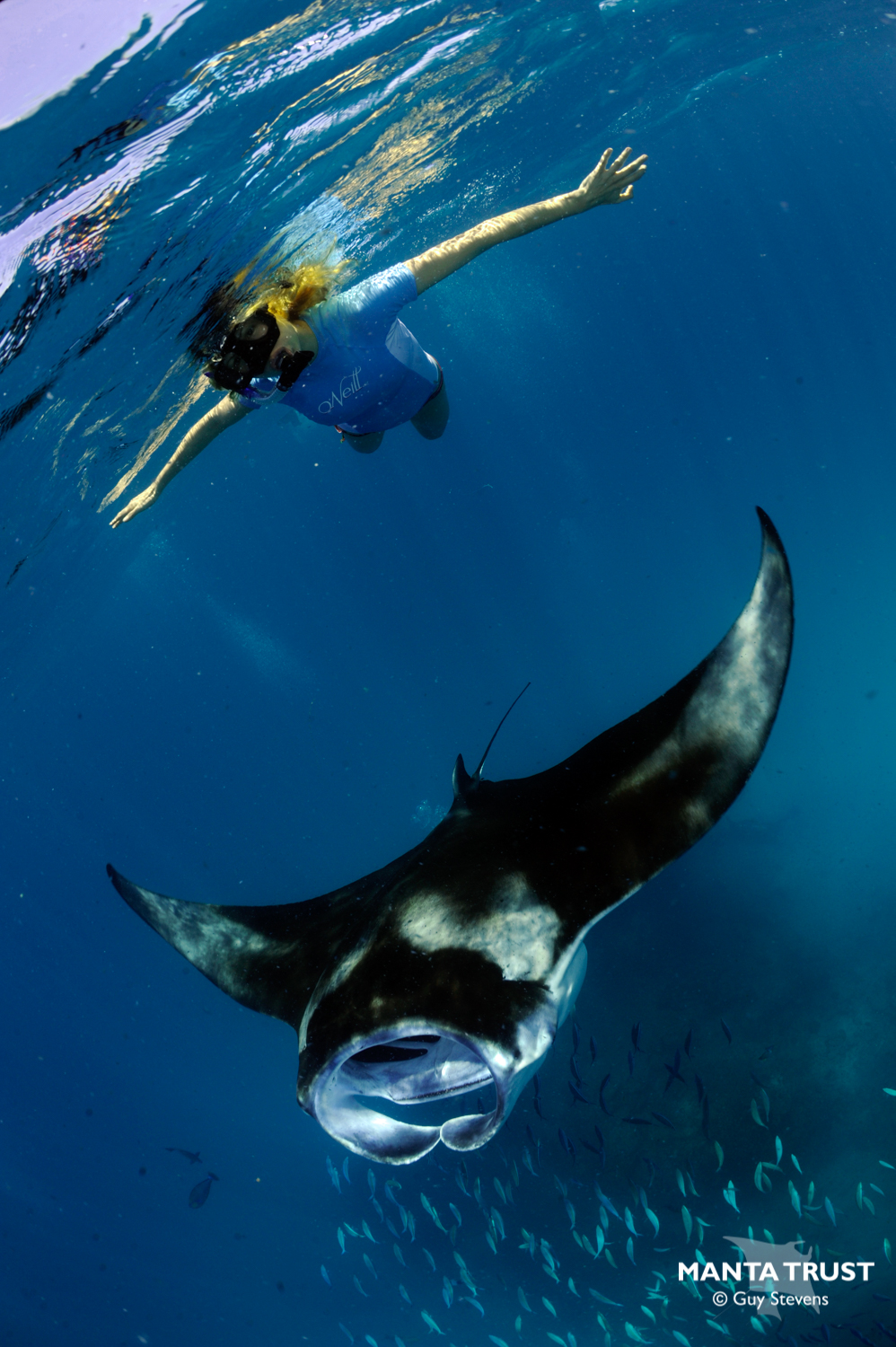 Tourist & Reef Manta_Maldives_Portrait