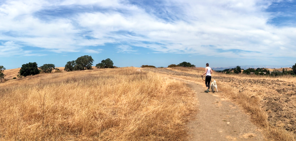 Sun-baked, well-maintained trails with views of wide-open spaces and the Stanford Dish. © 2017 Copyright All rights reserved - TheHikingCompanion.com