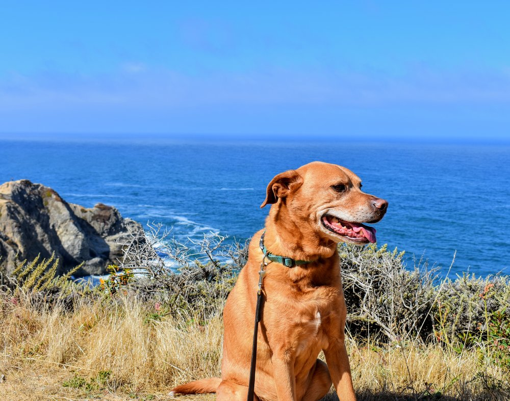 Dog friendly hike hiking trail northern california bay area restaurants