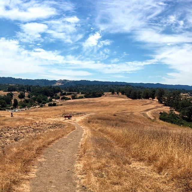 Now that it's not so hot, we may go check out the golden fields and big blue skies of the Pearson-Arastradero Preserve in Palo Alto. Interested? Read our trail review at TheHikingCompanion.com! See you on the trail! #hikingdog #hikingwithdogs #hiking #hikingadventures #hikingdogs #norcalhiking #norcalhikes #doghikers #doghike #doghikes #paloalto #pearsonarastraderopreserve #californiaadventure #californiahiking #hikenorcal #hikewithdogs #hikewithyourdog