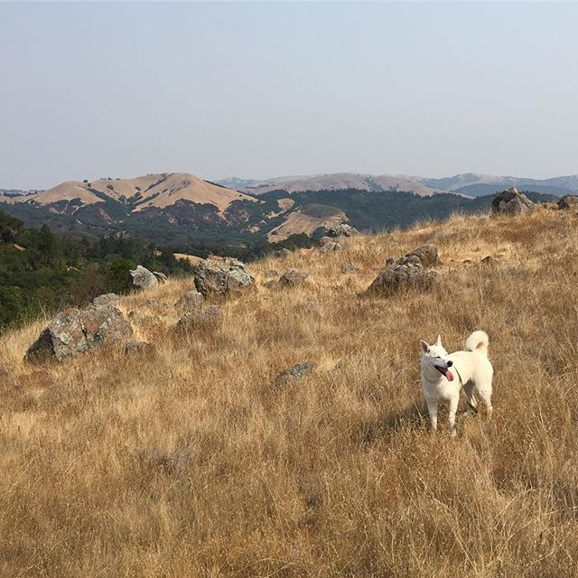 Looking like it's going to be a beautiful weekend for a hike in northern California! Not sure which dog-friendly trail is right for you? Check out our trail reviews at TheHikingCompanion.com. Maybe you'll see us and #GrammarTheDog on the trail! #dogs #dogsofinstagram #hikingdog #hikingwithdogs #hiking #hikingadventures #hikingdogs #norcalhiking #norcalhikes #doghikers #doghike #doghikes #californiaadventure #californiahiking #hikenorcal #hikewithdogs #hikewithyourdog