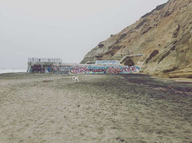 What a beautiful morning to take your dog to Fort Funston! #GrammarTheDog loves playing on the beach, but there's also bluffs, dunes, and even hang gliders to enjoy. Check out all of our adventures by clicking the link in @thehikingcompanion bio or go to TheHikingCompanion.com. #dogs #dogsofinstagram #hikingdog #hikingwithdogs #hiking #hikingadventures #hikingdogs #norcalhiking #norcalhikes #doghikers #doghike #doghikes #californiaadventure #californiahiking #hikenorcal #hikewithdogs #hikewithyourdog #california #californiaadventure #sf #beautifulmorning