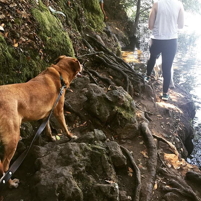#MowgliTheDog was soaking up the sunshine at Lake Anza this weekend! It's a short, fairly easy hike for a senior dog like Mowgs, and he absolutely loved it. For more easy dog-friendly hikes, click the link in @thehikingcompanion bio or go to TheHikingCompanion.com. #dogs #dogsofinstagram #hikingdog #hikingwithdogs #hiking #hikingadventures #hikingdogs #norcalhiking #norcalhikes #doghikers #doghike #doghikes #californiaadventure #californiahiking #hikenorcal #hikewithdogs #hikewithyourdog #california #californiaadventure #eastbay