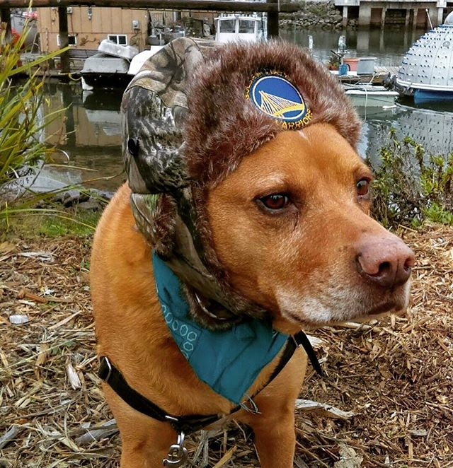 #MowgliTheDog is stoked for #NBA preseason to get started, repping the #gswarriors! For more of Mowgli's adventures, go to TheHikingCompanion.com or click the link in @thehikingcompanion bio! Go #dubs!  #dogs #dogsofinstagram #california #doglife #hat #hikingdog #hikingwithdogs #hikingdogs #norcalhiking #norcalhikes #doghikers #doghike #doghikes #hikenorcal #hikewithdogs #hikewithyourdog