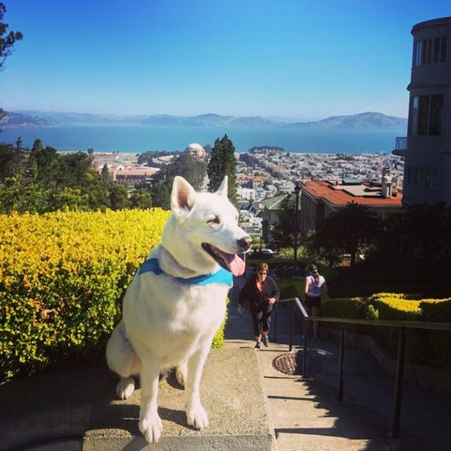 Soaking up the sunshine with #GrammarTheDog at the #LyonStreetSteps in #SF on this #SundayFunday! Check out all of our adventures by clicking the link in @thehikingcompanion bio or go to TheHikingCompanion.com.  #dogs #dogsofinstagram #hikingdog #hikingwithdogs #hiking #hikingadventures #hikingdogs #norcalhiking #norcalhikes #doghikers #doghike #doghikes #californiaadventure #californiahiking #hikenorcal #hikewithdogs #hikewithyourdog #california #californiaadventure #beautifulmorning #sunnyday