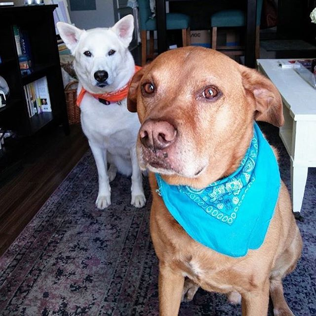 Be mindful of the air quality this #weekend, for your own sake and for your #pets! #MowgliTheDog and #GrammarTheDog will only be going outside as often as they have to. Thoughts and prayers to all those dealing with the much more pressing impacts of the fires in the North Bay than the impaired air quality we're getting here in #SF. Stay safe everyone!  #dogs #dogsofinstagram #petsofinstagram#hikingdog #hikingwithdogs #hiking #hikingadventures #hikingdogs #norcalhiking #norcalhikes #doghikers #doghike #doghikes #californiaadventure #californiahiking #hikenorcal #hikewithdogs #hikewithyourdog #california #staysafe