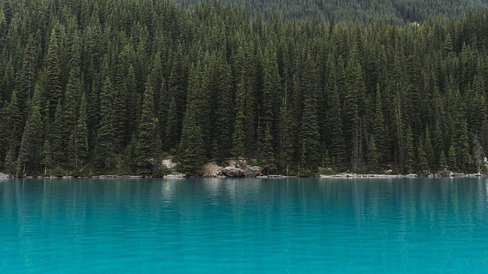 7.Carolina Pines -