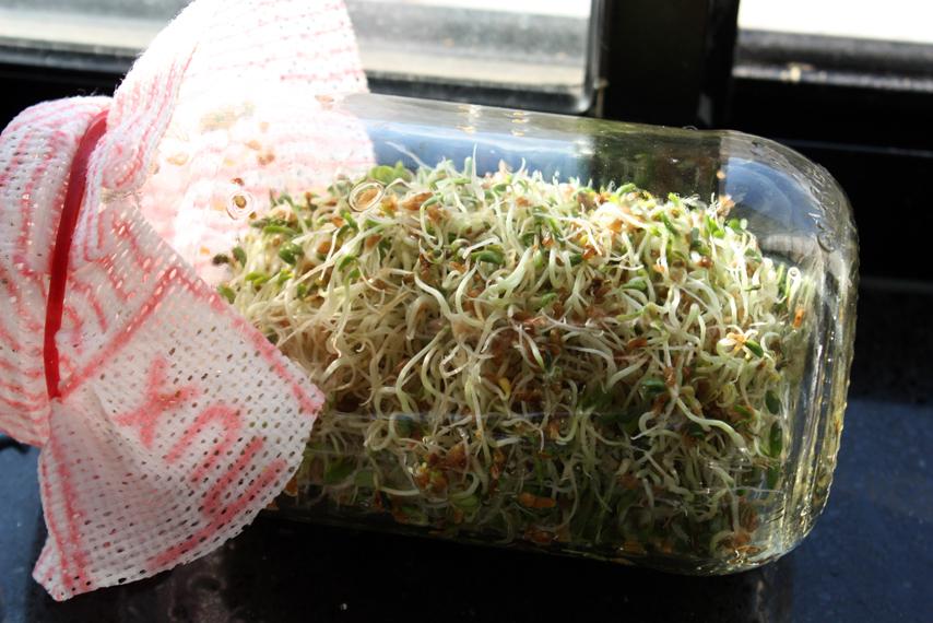 Quinoa-SPROUTs-jar.jpg
