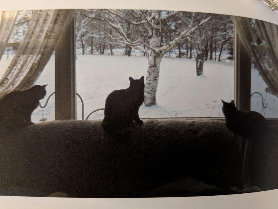 << Lucy Lou, Keba & Crazy cat ♥