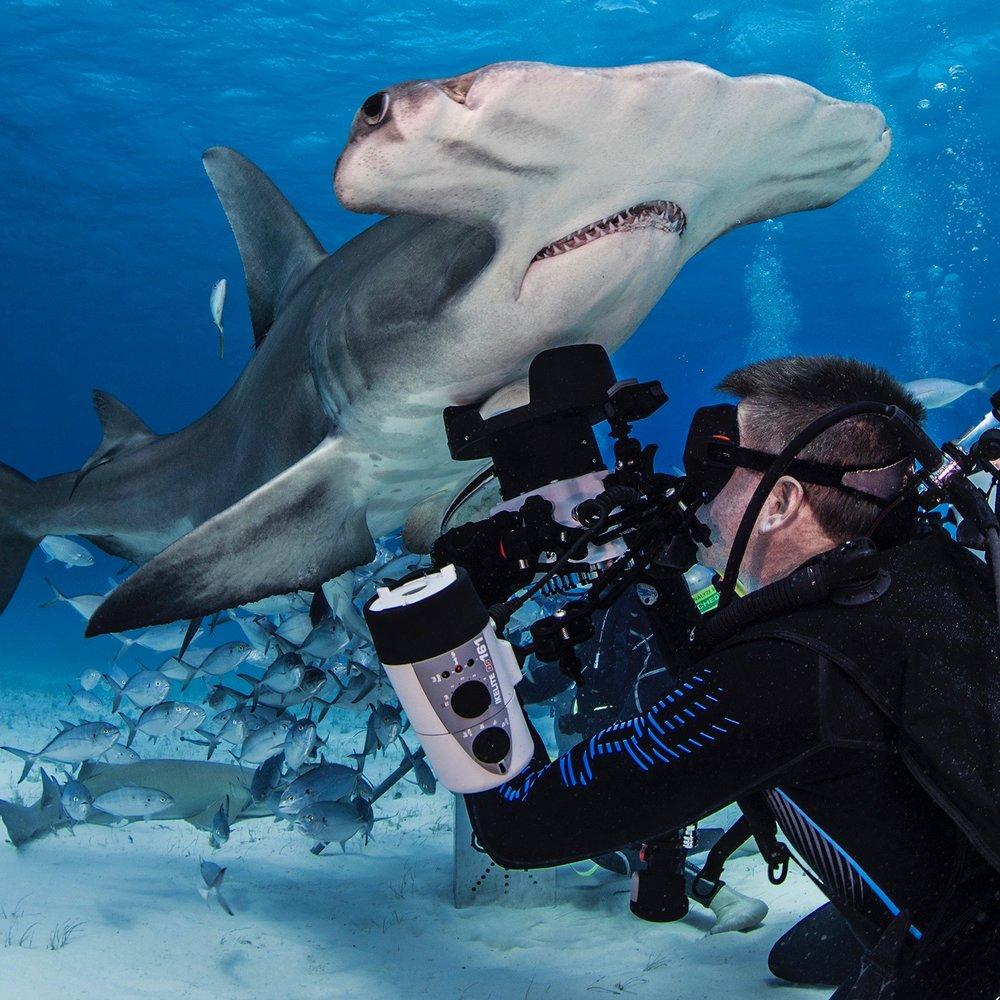 켄 키퍼   켄 키퍼는 텍사스, 휴스턴을 기반으로 한 전문 수중 사진작가입니다. 그는 주로 수중 왕국에 대한 감상과 인식을 불러일으키는 것을 목표로 인간을 포함한 대형 동물을 주로 촬영합니다. 엄청난 상어 옹호자로서, 그는 항상 상어에 대한 진실 대 언론의 과장보도를 일반 대중에게 알리는 방법을 찾고 있습니다.  그는 1994년에 PADI 다이브 강사가 되었습니다. 그러나 가르치는 것보다 예술적 형상화를 구현하는 다이빙에 대한 자신의 열정을 발견하였습니다.  그는 the exclusive Ocean Artists Society 의 멤버이며, 예술을 사용해 우리의 자연계를 보존해야할 필요성에 대한 인식을 가져오는 것에 대해 확고하게 믿고 있습니다.  그는 바다 생물, 수영 팀, 피트니스 모델, 어린이, 경기하는 다이버 등 물속의 모든 것을 찍는 것에 열정적 입니다.  켄은 전문응급구조사(emergency medical technician) 및 다이브 강사였으며 안전 다이버로 활동할 것입니다.
