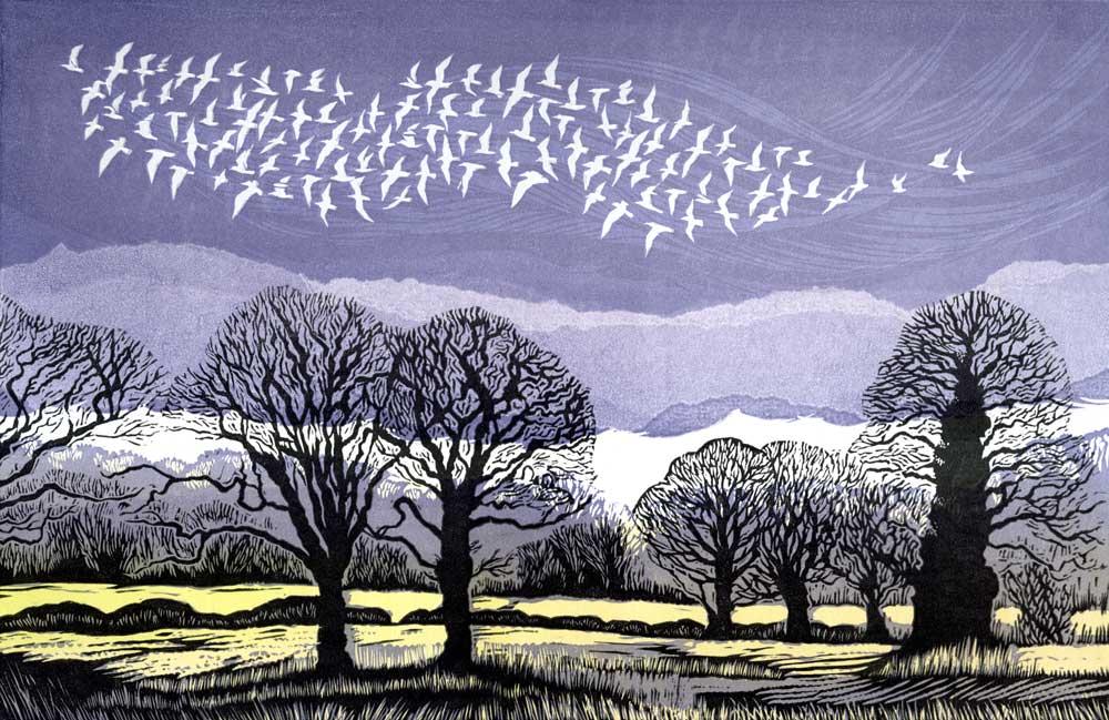 White Flock Rising