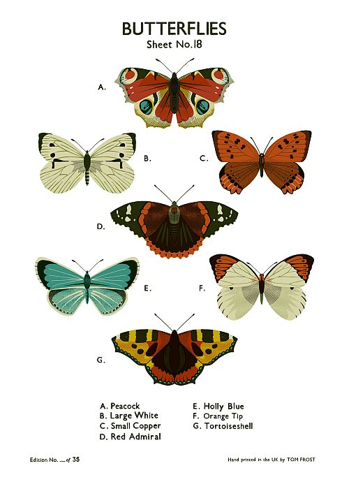 Butterflies School Chart
