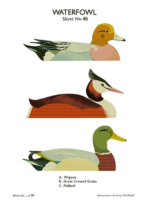 Waterfowl School Chart