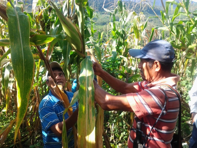 Hope for the future: A new generation learns about sustainable agriculture and seed collection from their parents.