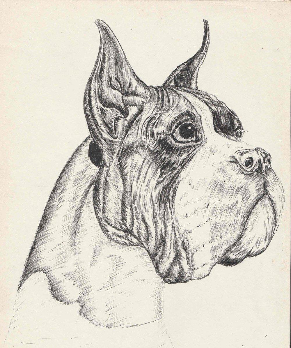 Dog1.jpg