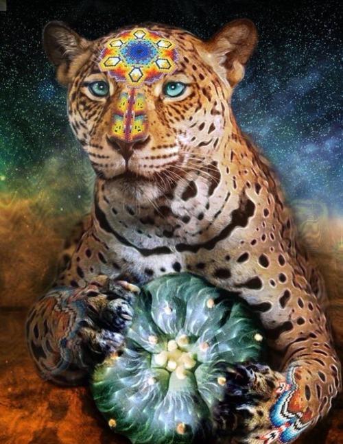 jaguarmedicine.jpg
