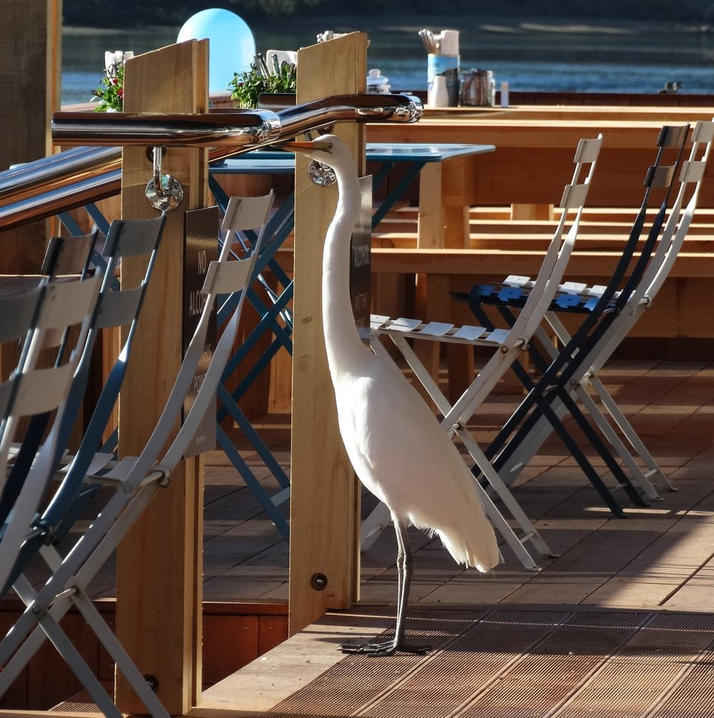 Heron on Deck 2.jpg