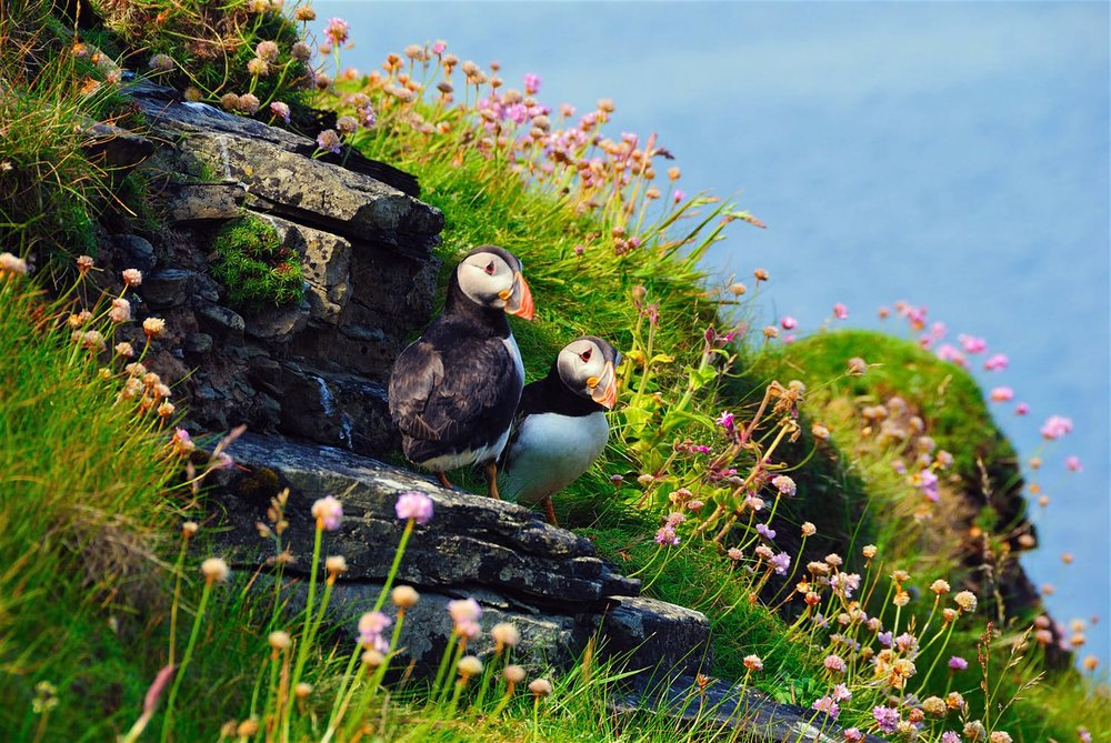 Puffins-Orkney-Craft-Vinegar.jpg