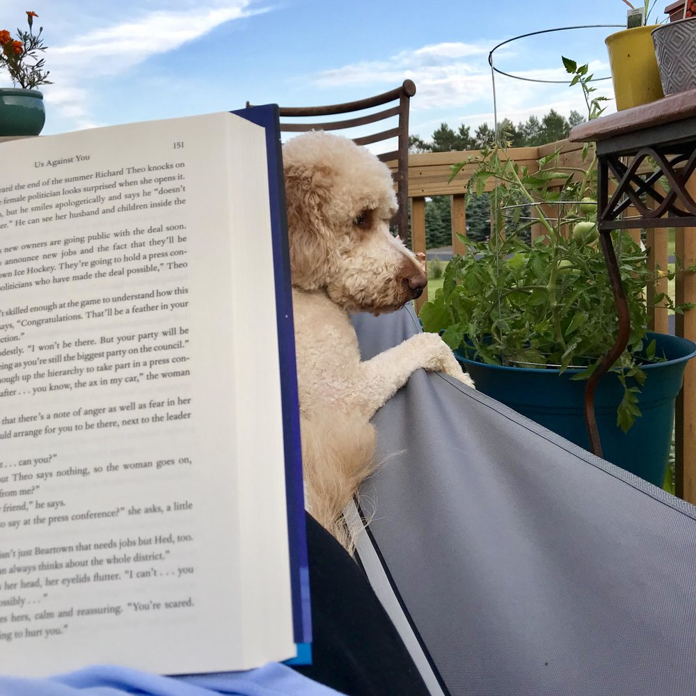 One of the greatest joys of home is my quiet deck that overlooks the sunset perfectly visible in our neighborhood. Harvey makes sure he says hi to any passersby while I read.