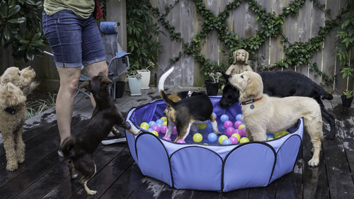 Puppy Training Package -     Normal.dotm  0  0  1  32  186  Home  1  1  228  12.0             0  false      18 pt  18 pt  0  0    false  false  false                       /* Style Definitions */ table.MsoNormalTable {mso-style-name: