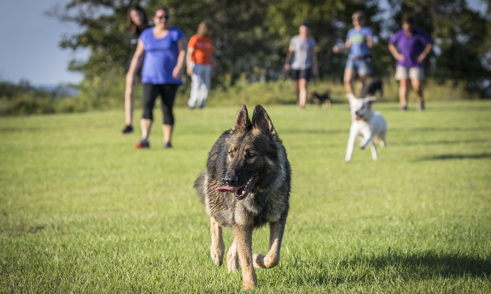 Specialty Workshops & Educational Seminars - Our workshops focus on practicing and improving specific behaviors and our seminars cover a wide variety of topics designed to enhace your relationship with your dog.