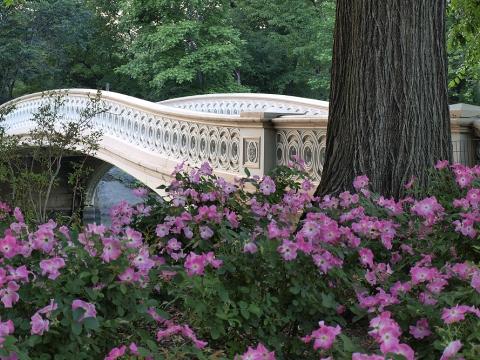 Bow-Bridge-in-Central-Park.jpg