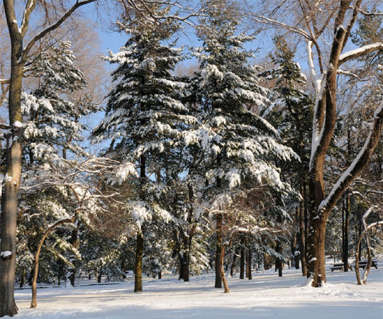 enjoy-winter-1.jpg