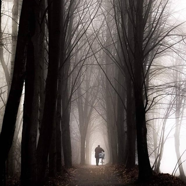 A man walks his bicycle in the woods in late autumn during hazy weather.  Chorzow, Poland, 2016 © Arek Rataj  #poland #lonely #bicycle #haze #mist #foggymorning #autumn #colorphotography #instagram #streetphotos #forest #traveler #natgeoyourshot #featureme #minimalism #