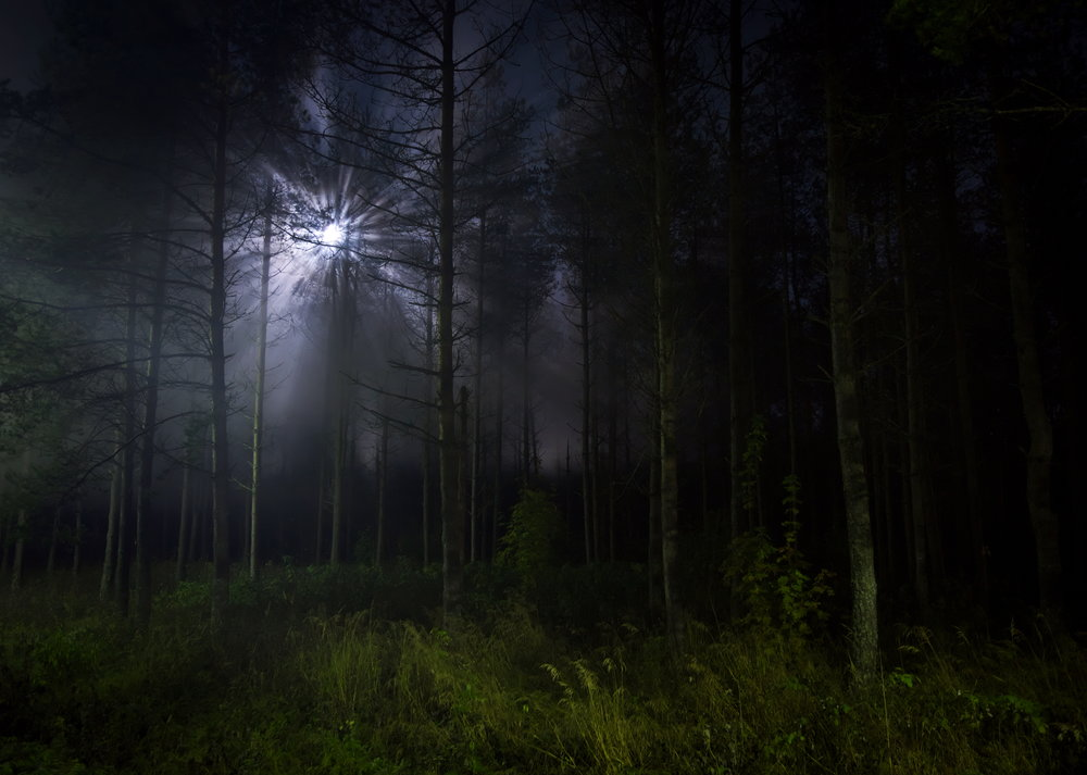 Moonlight in the Dark Forest