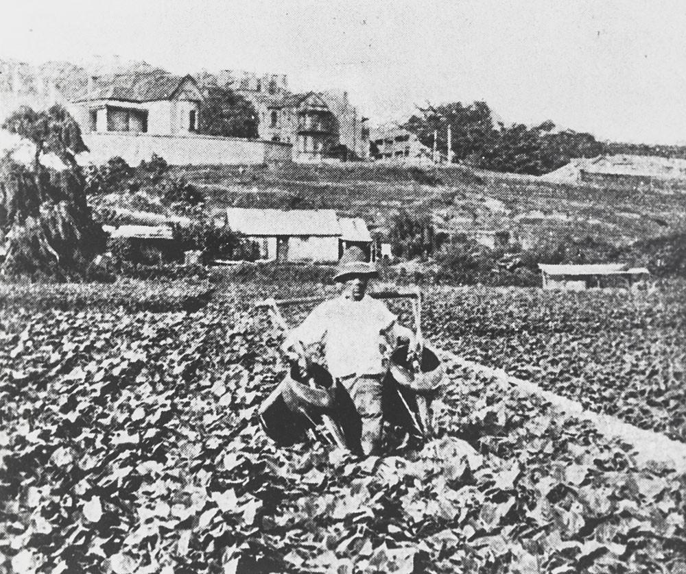 一名华人菜农正在浇菜。 图片来自新州州立图书馆 Image courtesy State Library of NSW