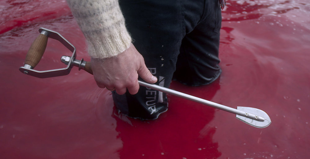 """人站在被鲸鱼血水染红的水里,当地人用特制的""""更人性化的""""工具杀死鲸鱼。图片来源:电影截图"""