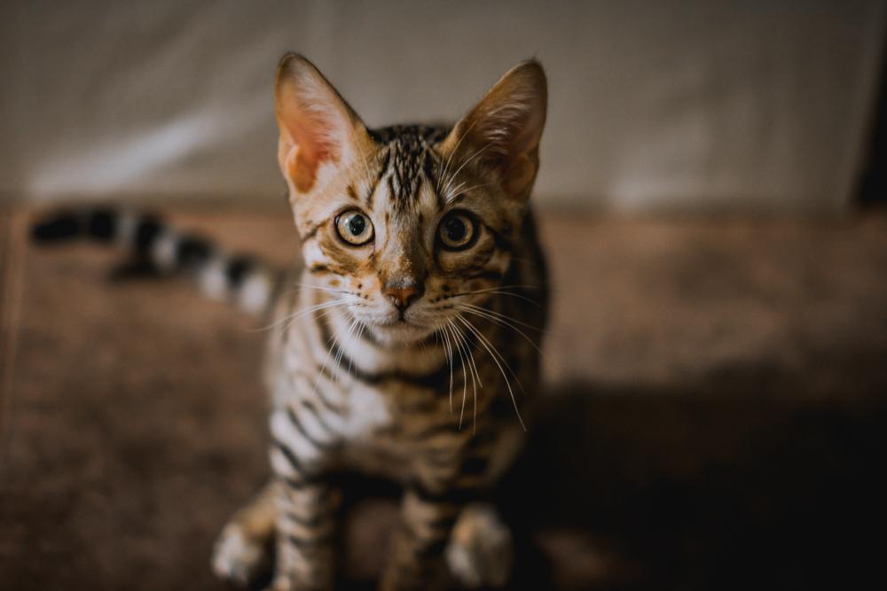 Cat port-4 2.jpg