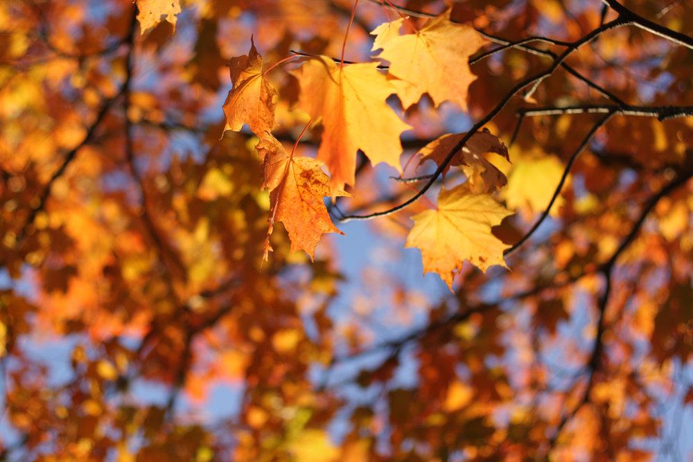 B16_Oct09_Fall_Leaves_07.jpg