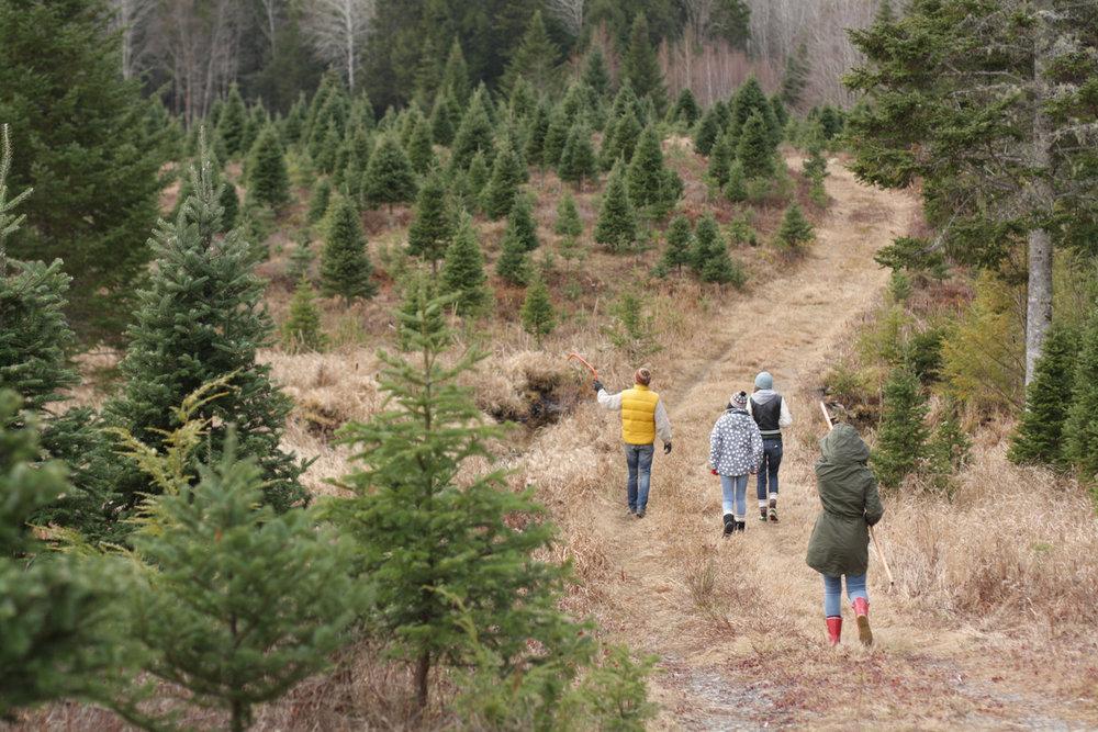 B15_Dec11_Christmas_Tree_Hunting_2015_09.jpg