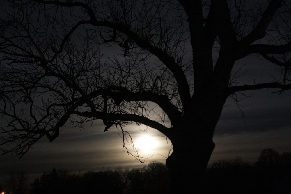 B15_Nov07_Moon_Tree_02.jpg