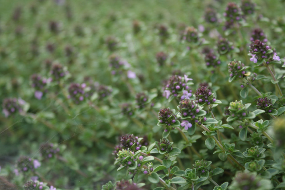 B15_In_the_Garden_10_06.jpg