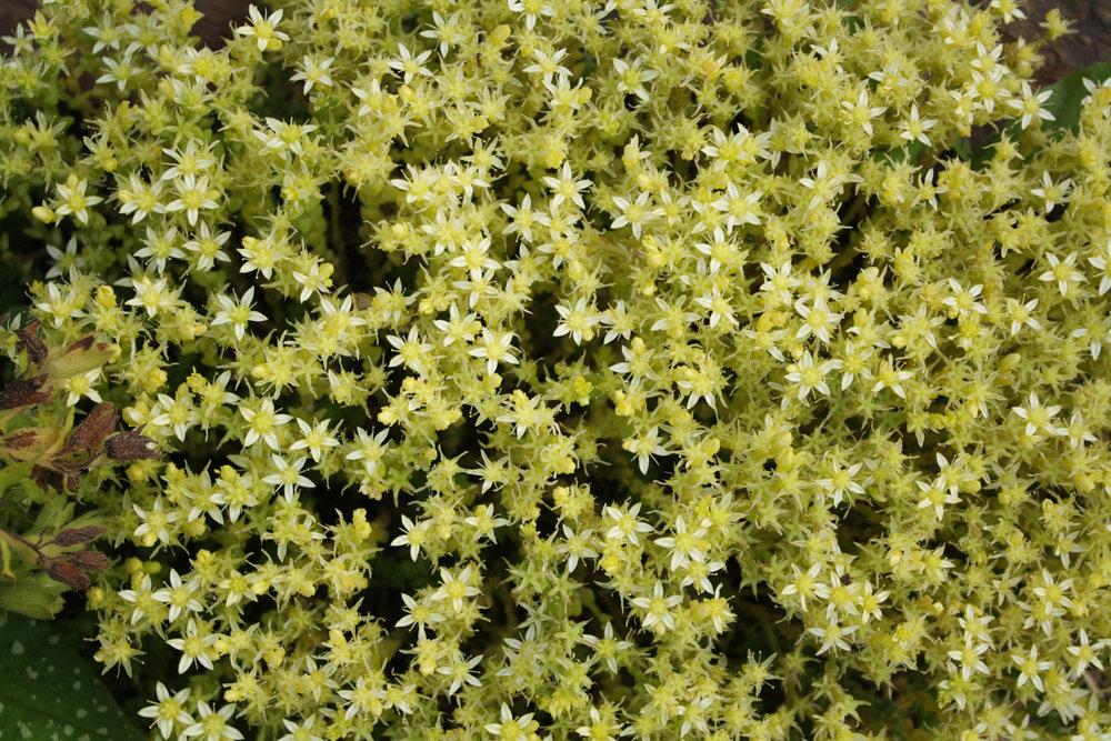 B15_In_the_Garden_12_05.jpg