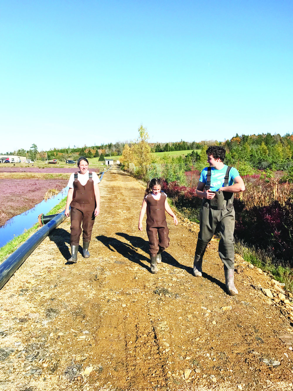 Evelyn, Ella, and Ben Ernst head back to work at the cranberry field. (David Ernst photo)