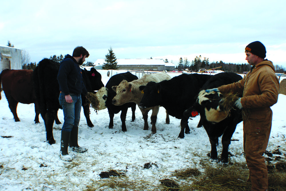 Nathan Murray, left, and his father Robert take time to interact with their beef herd. (Joan LeBlanc photo)
